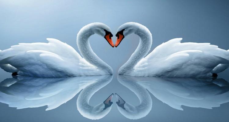 Liefde Delen is... een gedicht voor jou, die andere vrouw ...