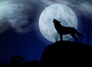 huilendewolf